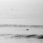 photographe surf gironde bordeaux