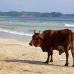 Surf Trip Sri Lanka Mirrisa Hikaduwa Kabalana Clement Philippon Photographe